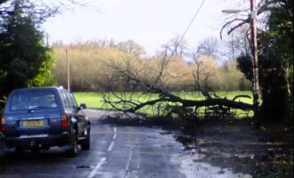 Fallen tree on road