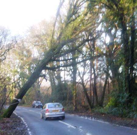 Tree leaning across road